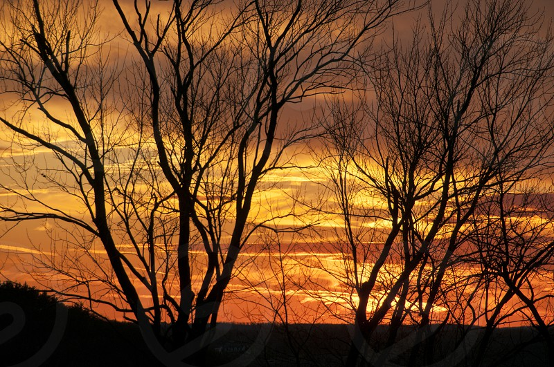 silhouette of trees during orange sunset photo