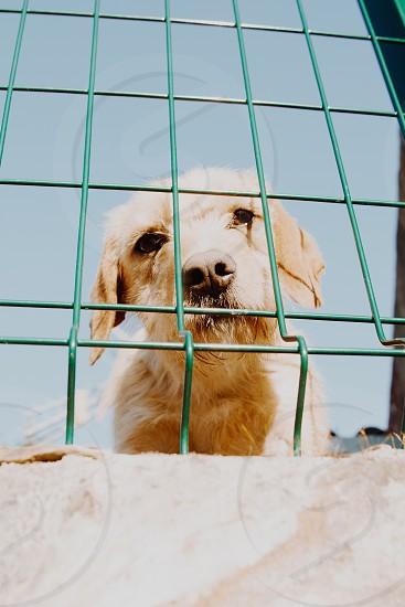 cute dog photo