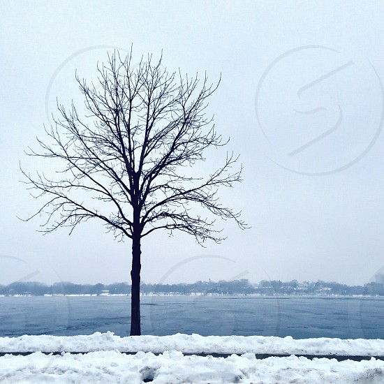December at Lake Calhoun Minneapolis.  photo