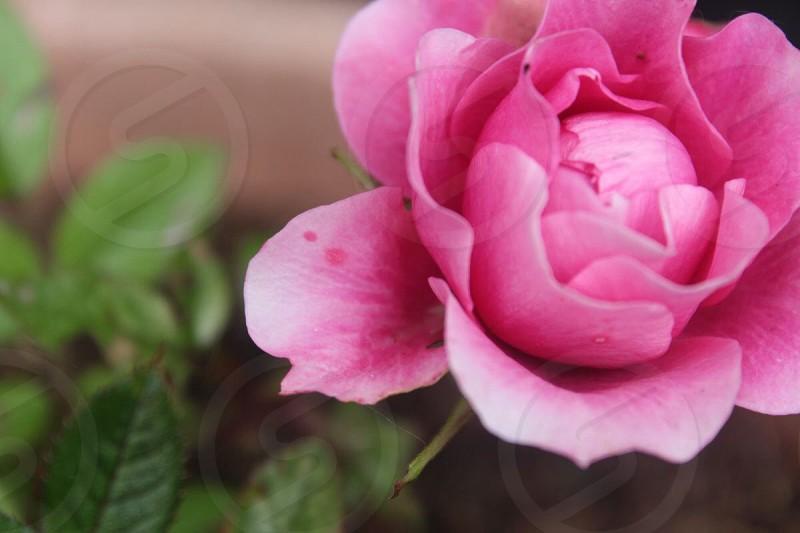 Simple flower  photo