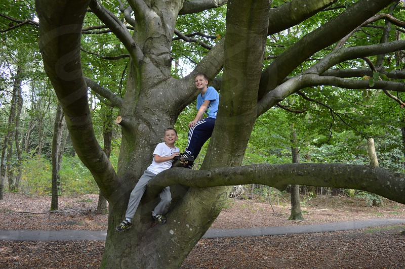 two Boys in a tree. photo