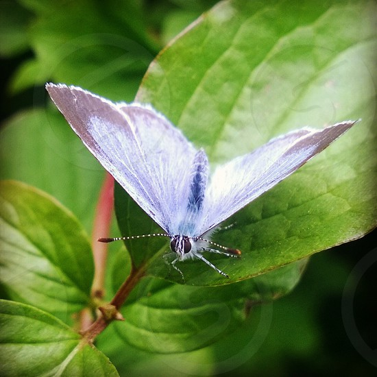 Blue butterfly close up photo