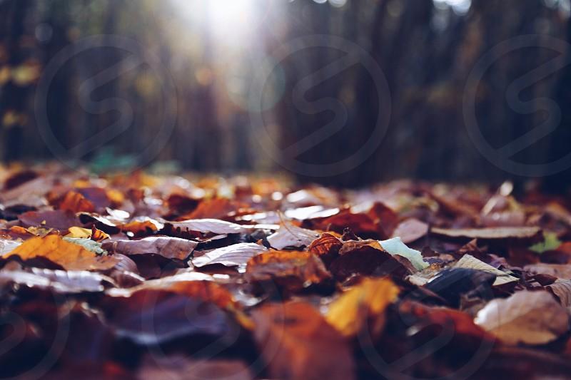 Sun rays ground forestautumn photo