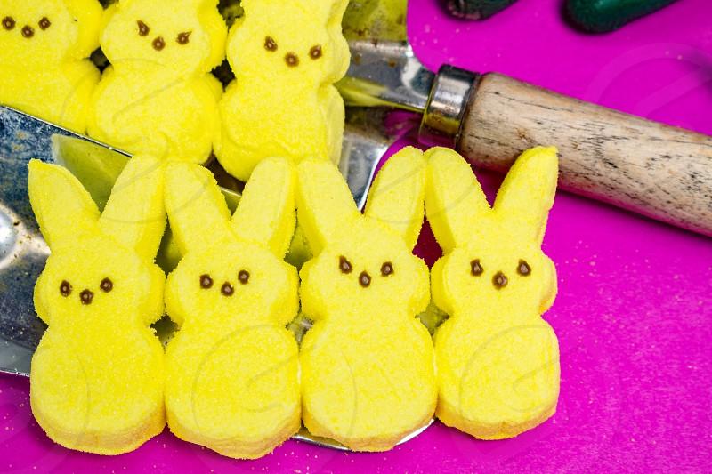 Easter spring peeps pink yellow rabbit marshmallows sweet snacks treat garden  photo