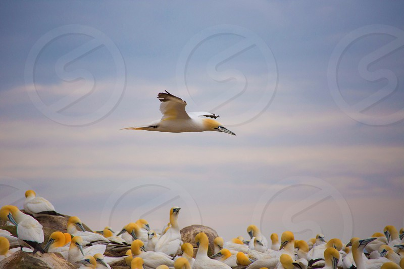 Fly by! photo