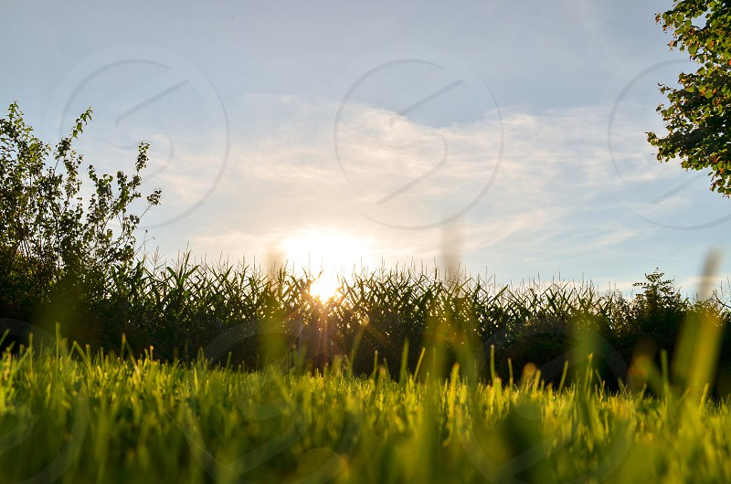 green grass in a field photo
