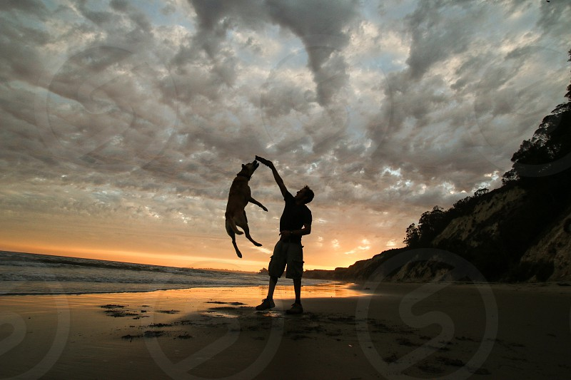 dog jumping in front of man on beach shore under orange sunset photo