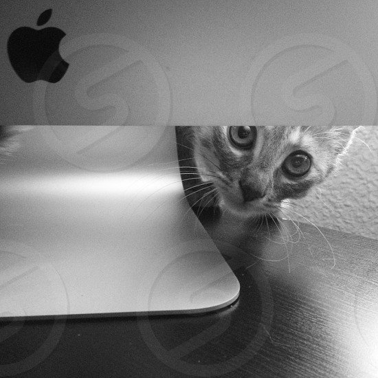 Cat Mac watching spying spay watc look black and white photo
