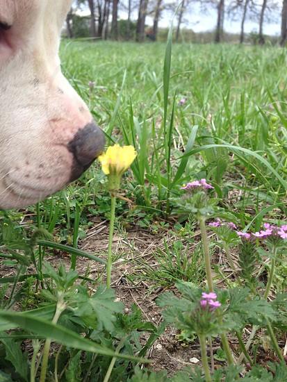 Spring Smells photo