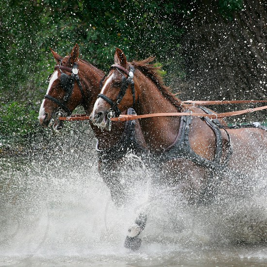 Windsor Horse Show episode photo