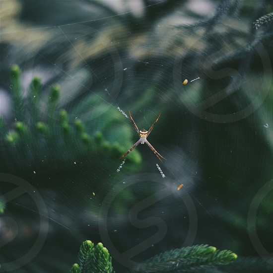 spider green leaves web photo