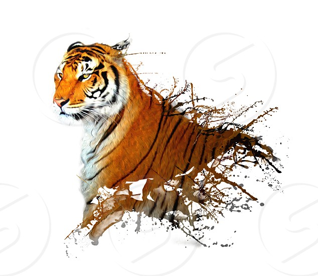 real tiger with the paint splashes photo