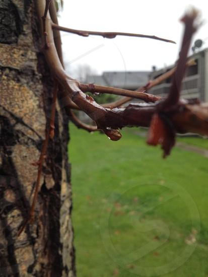Raindrops photo