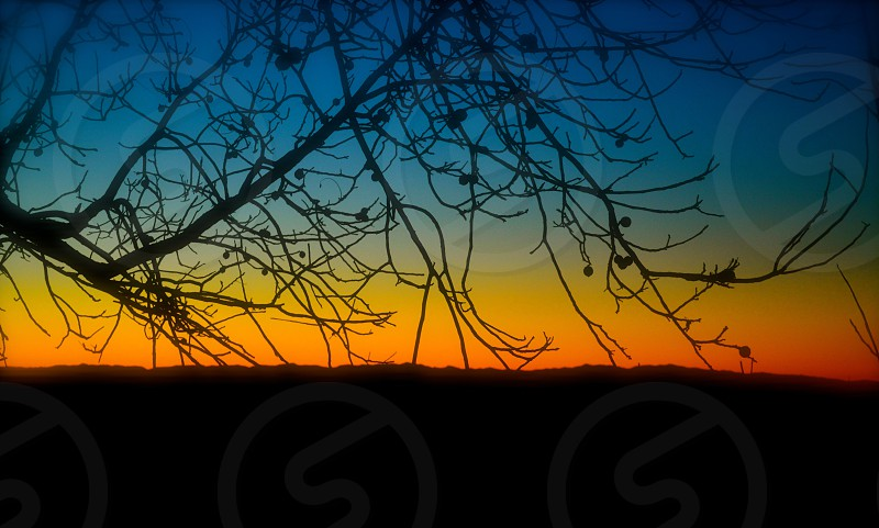 winter sunset branches tree with no leaves photo