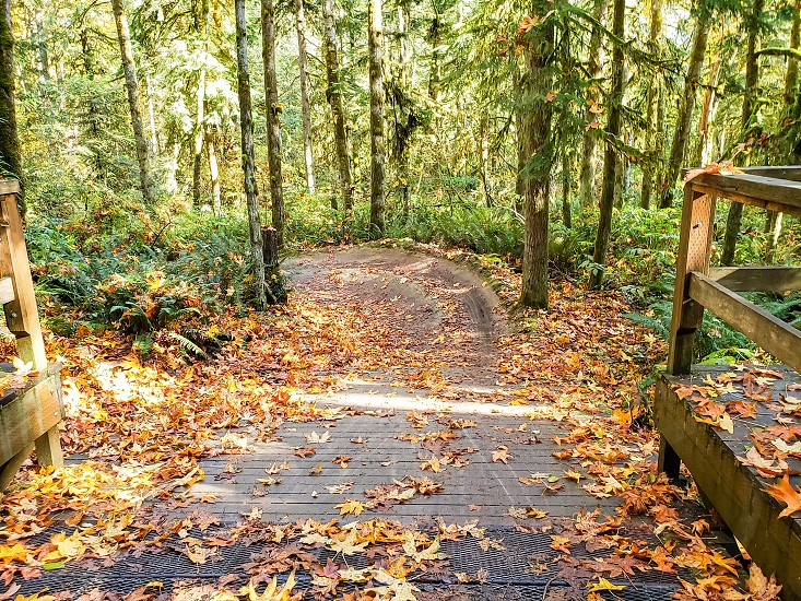 A view of a forest bike park ramp during the fall season. photo