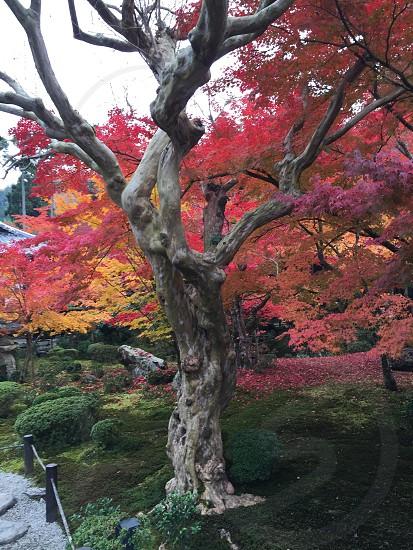 京都 円光寺 photo