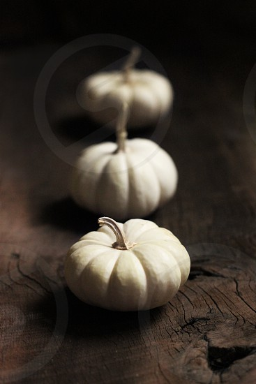 3 white pumpkins photo