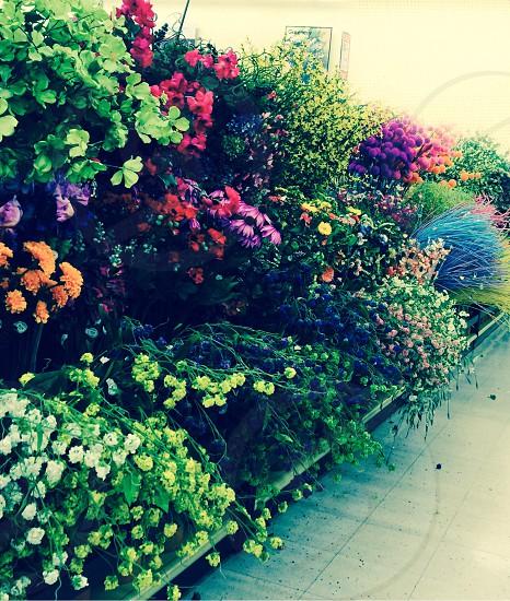 Flowerscolorful  photo