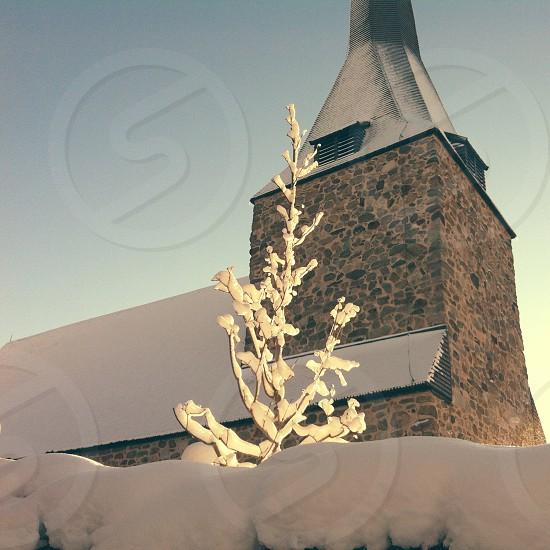 white snow on tree photo