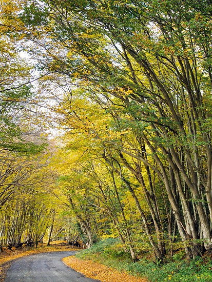 Autumnal Scene in the Sussex Countryside photo
