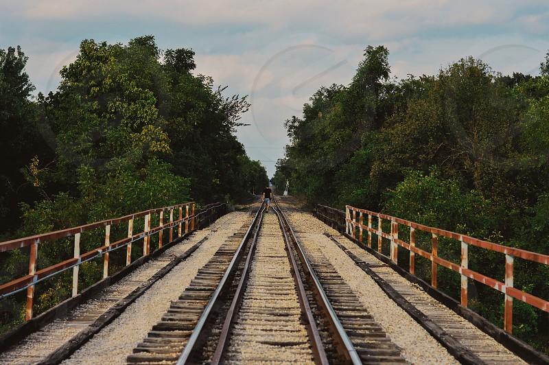 railroad tracks through green trees photo