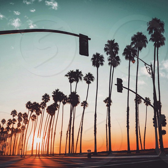 2 traffic lights beside road inline of palm trees under blue sky photo