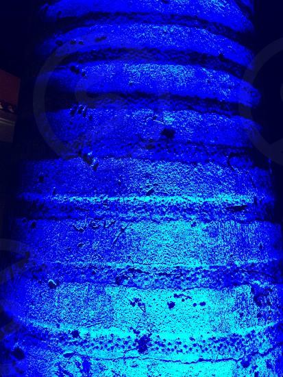 Blue palm tree light night closeup Aruba photo