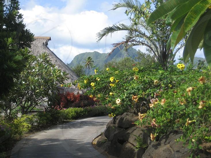 tropical flowers Tahiti photo