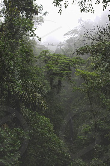 Hanging bridges in the Arenal rain forest Costa Rica photo