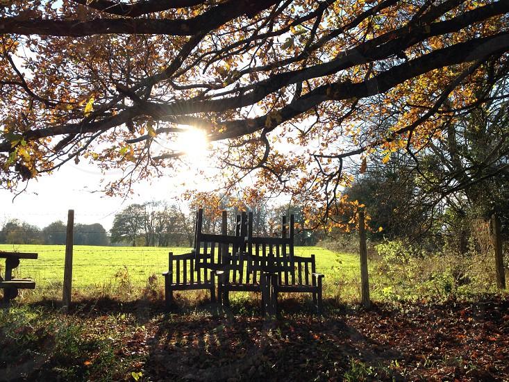 Autumnal photo