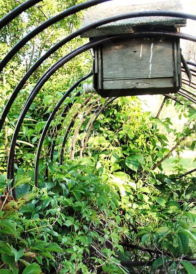 Farm bird house photo