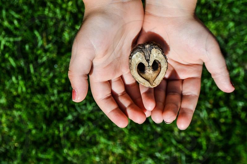 Walnut shell half  looks like heart being held over green grass in little hands photo