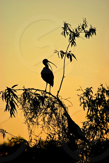 long beaked and legged bird silhouette during sunset photo