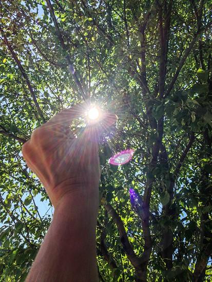 Catching the Sun photo