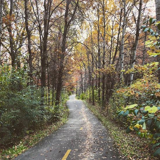 Fall bike rides  photo