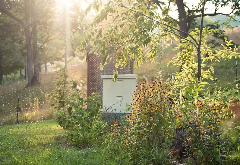 bees honey farm photo