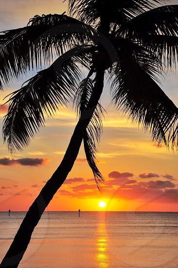 sunset over sea beside palm tree photo