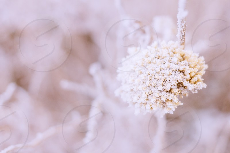 muted tones floral nature winter color photo