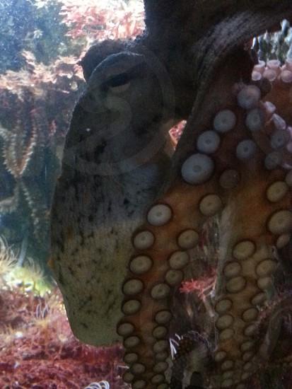 Aquarium - Vienna photo