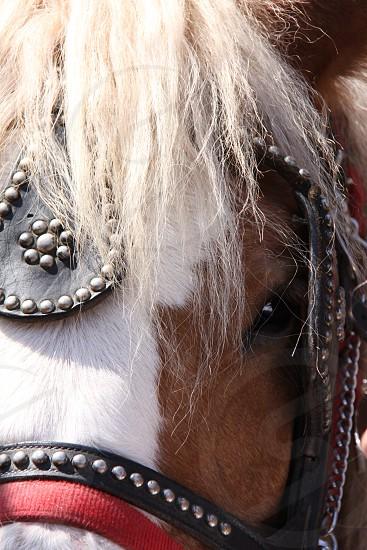 Draft Horse Close Personal Carriage Eye Friend Calm Power Beauty Steady Focus photo