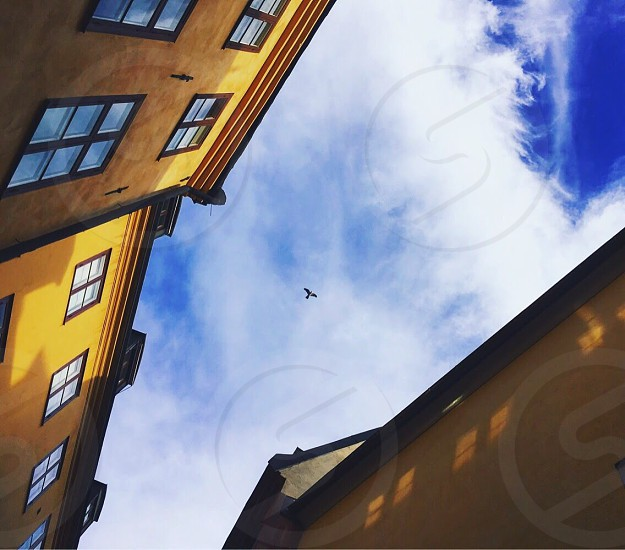 Bird flying in the sky between two high buildings.  photo