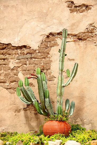 cactus wall brick pot grass green beige brown orange green spanish natural light garden  photo