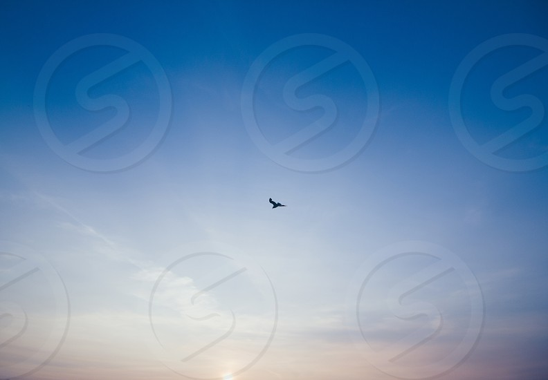 bird flying up in the sky view photo