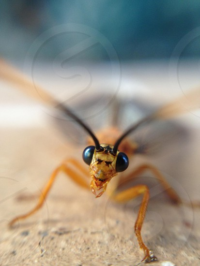 insect eyes photo