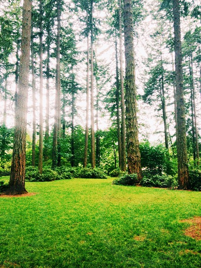 view of tall trees in forest photo