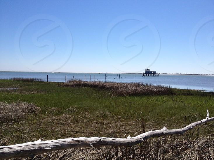 Chincoteague Island V.A photo