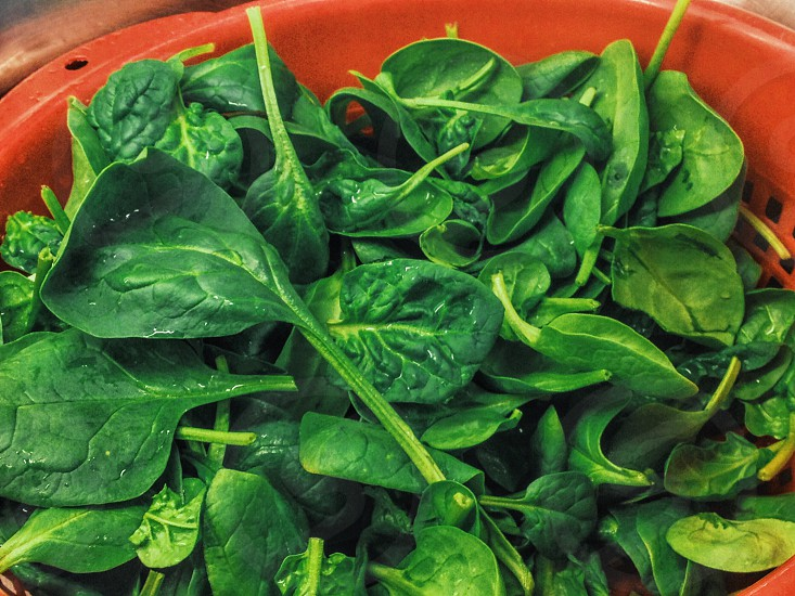 green vegetable leaf in red container photo