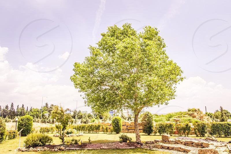 Botanic Garden Landscape Design photo