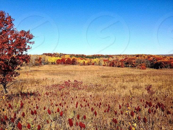 Field on a Fall day photo