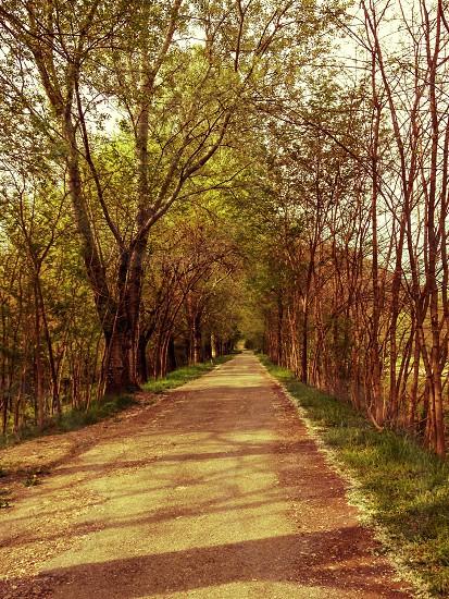 Nature landscape trees path colours natural light spring photo